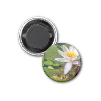 A frog under a flower of water lily magnet