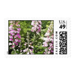 A garden full of Foxgloves Stamp