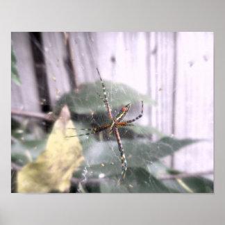 A Garden Spider Posters