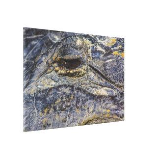 A Gator's Eye Canvas Print