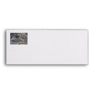 A Gator's Eye Envelopes