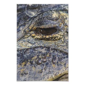 A Gator's Eye Photographic Print