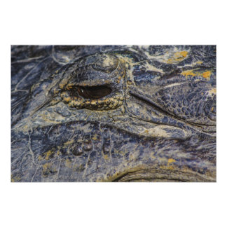 A Gator's Eye Poster