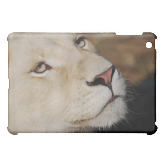 A gentle lion face South Africa iPad Mini Cover