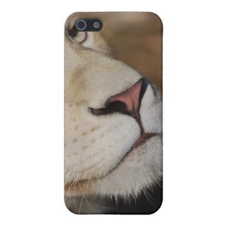 A gentle lion face South Africa iPhone SE/5/5s Case