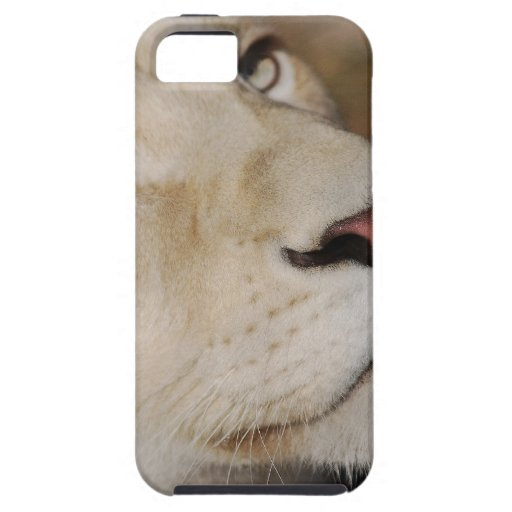 A gentle lion iPhone 5 cases