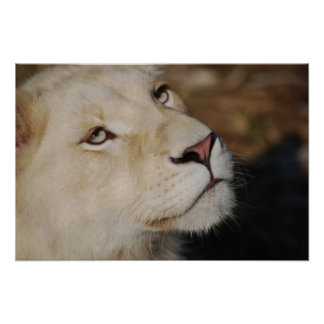 A gentle lion poster