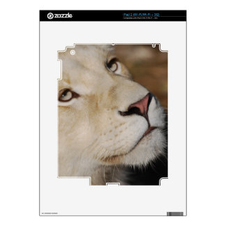 A gentle lion skins for iPad 2