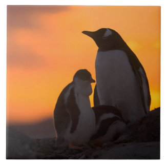 A gentoo penguin adult and chick are silhouetted ceramic tile