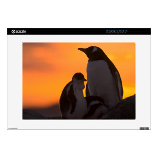 A gentoo penguin adult and chick are silhouetted laptop skin