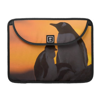 A gentoo penguin adult and chick are silhouetted sleeve for MacBooks