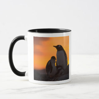 A gentoo penguin adult and chick are silhouetted mug