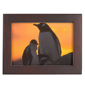 A gentoo penguin adult and chick are silhouetted memory box