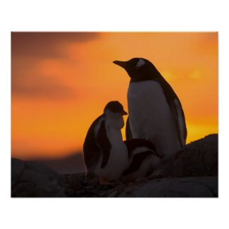 A gentoo penguin adult and chick are silhouetted poster
