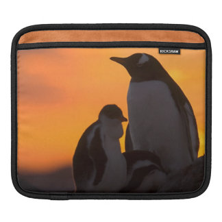 A gentoo penguin adult and chick are silhouetted sleeve for iPads
