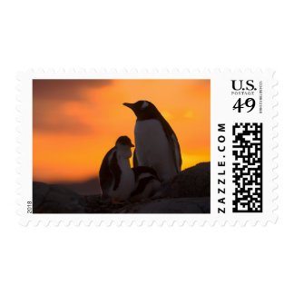 A gentoo penguin adult and chick are silhouetted stamp