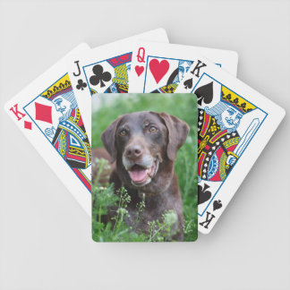 A German Shorthaired Pointer dog in the grass Bicycle Playing Cards