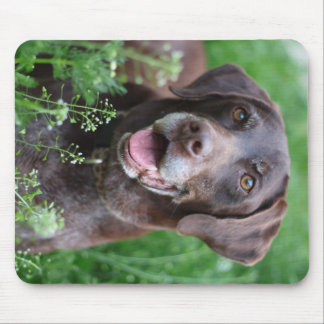 A German Shorthaired Pointer dog in the grass Mouse Pad