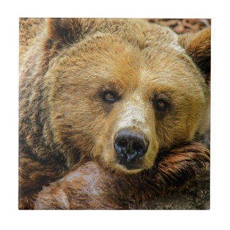 A giant brown bear tile