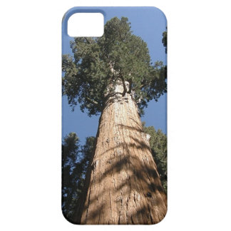 A Giant Sequoia Tree Protects Your Phone iPhone SE/5/5s Case