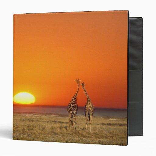 A Giraffe couple walks into the sunset, in Vinyl Binder
