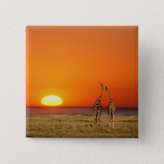 A Giraffe couple walks into the sunset, in Pinback Button