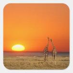 A Giraffe couple walks into the sunset, in Sticker