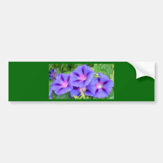 A Glorious Collection of Purple Ipomoea Bumper Sticker