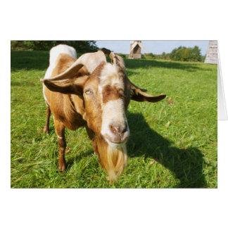 A goat - note card