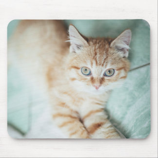 A Golden Color Kitten Lying Down Mouse Pad