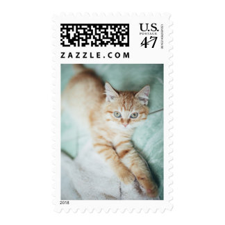 A Golden Color Kitten Lying Down Postage