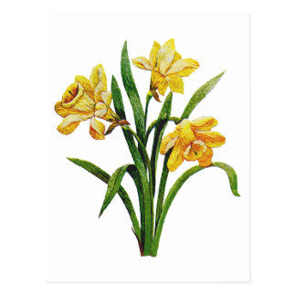 A Golden Host of Embroidered Daffodils Postcard
