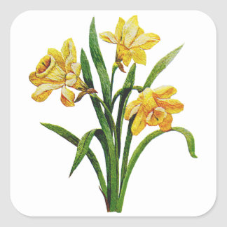 A Golden Host of Embroidered Daffodils Square Sticker