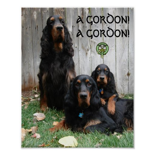 A GORDON! A GORDON! Gordon Setter Poster