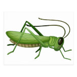 A grasshopper postcard