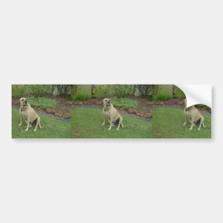 A Great Big Lovable Puppy Named Zac Car Bumper Sticker