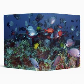 A Great Diversity of Fish at Pearl & Hermes Atoll Binder
