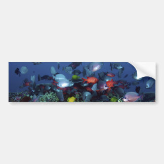 A Great Diversity of Fish at Pearl & Hermes Atoll Car Bumper Sticker