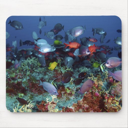 A Great Diversity of Fish at Pearl & Hermes Atoll Mouse Pads