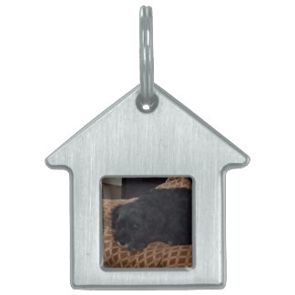 A great gift - a House Tag/Key chain for Moxie Pet ID Tag