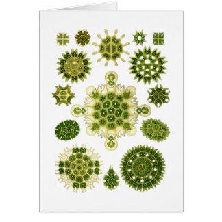 A Green Algae Greeting Cards