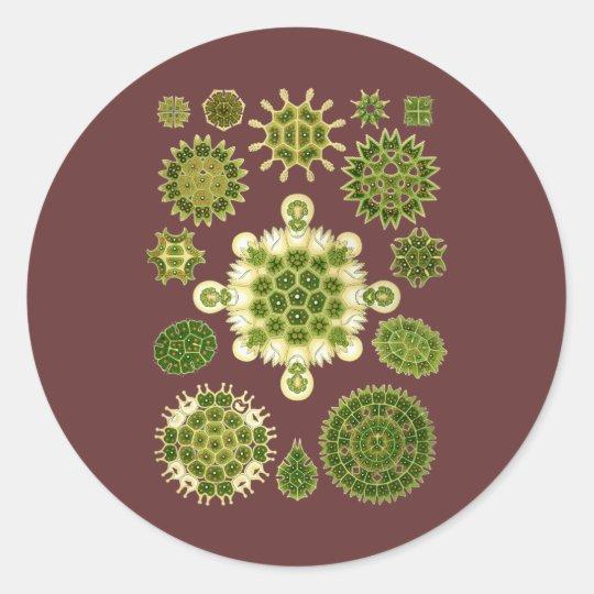 A Green Algae Classic Round Sticker
