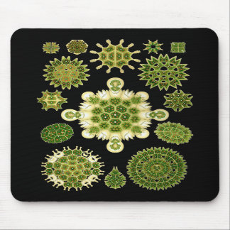 A Green Algae Mouse Pad