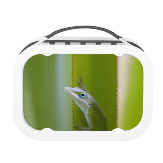 A green anole is an arboreal lizard lunch box