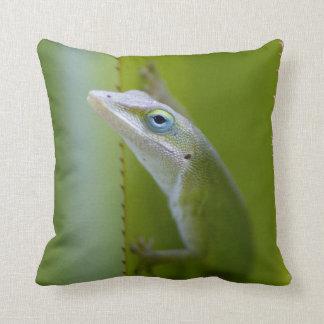 A green anole is an arboreal lizard pillow