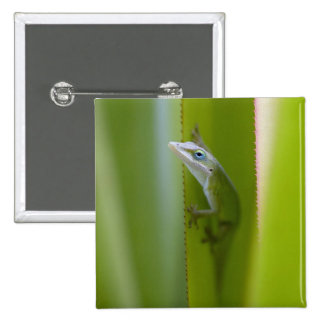 A green anole is an arboreal lizard pinback button