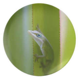 A green anole is an arboreal lizard plates