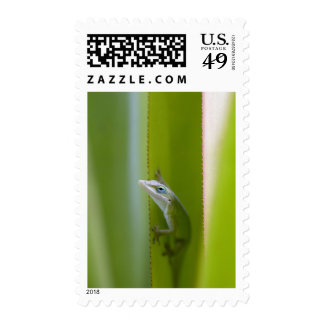 A green anole is an arboreal lizard stamp
