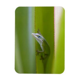 A green anole is an arboreal lizard rectangular magnet