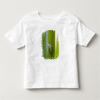 A green anole is an arboreal lizard tee shirt